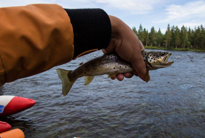 Ловим рыбу (с лицензией!)