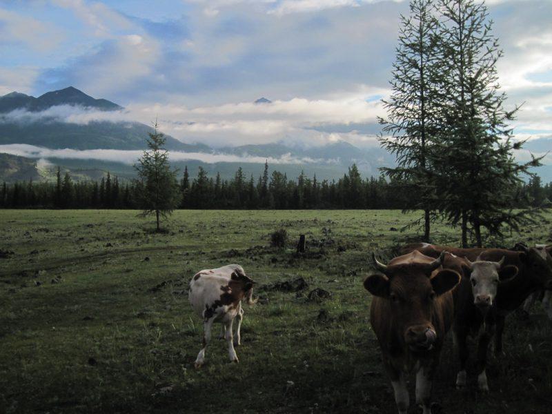 Производители экологически чистого молока