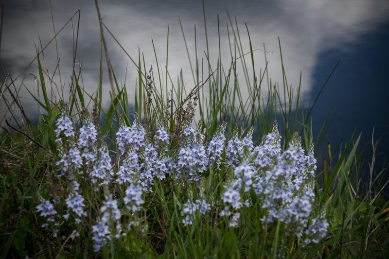 Первомайский уикенд на Южном Буге. Цветы на обрыве