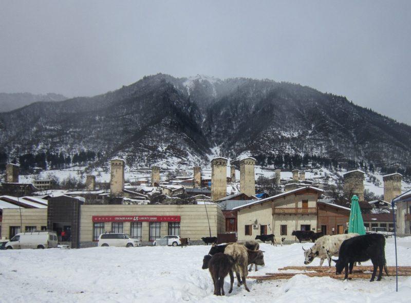 Местия. Сванские башни, коровы и ... банк