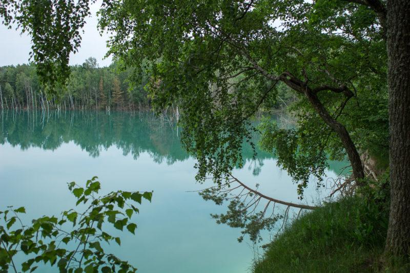 Затопленный Черепашинский карьер. Затопленные деревья