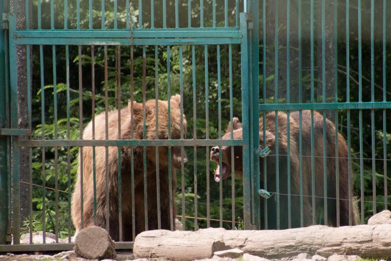 Тур по Закарпатью. Центр реабилитации бурых медведей
