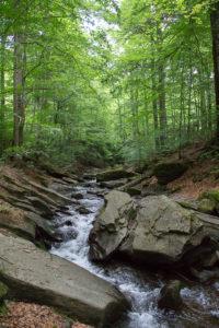 Тур по Закарпатью. Река Туричка выше водопада Партизан