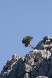 Турция. Острова. И на камнях растут деревья