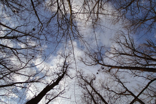 Небо в лесу без лисьев