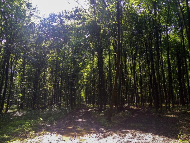 В лесу очень мокро